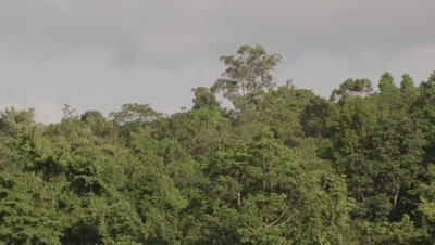 General view of rainfores canopy