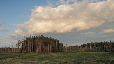 Timelapse of clouds moving over forest
