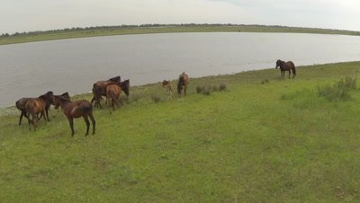 Herd of horses resting near a river