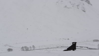 General view of snow covered mountains with Border Collie in foreground