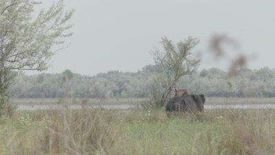 Herd of wild Horses and foals grazing