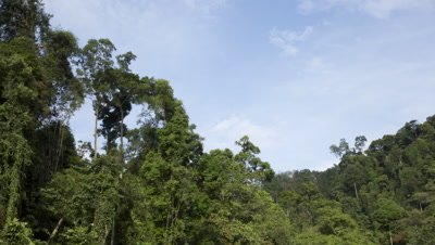 Time lapse clouds moving over the rainforest at Gunung Leuser National Park
