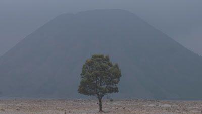 Scenic view of lone tree in front of Gunung batok volcano