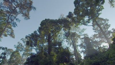 Scenic view of the rainforest canopy in the morning light