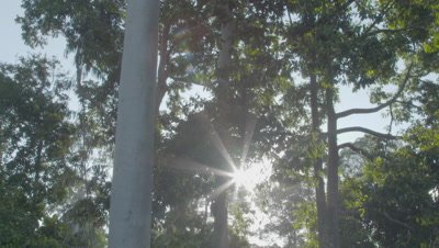 Sunlight streams through the trees as the camera tilts up to reveal the rainforest canopy from beneath the trees