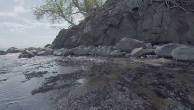 Camera pans down from the roots of a tree to a Yellow-Lipped Sea Krait moving over the rocky shore