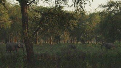 Gorongosa Park Video Clips
