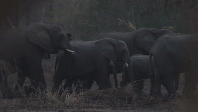 Elephant herd traveling through a dusty area