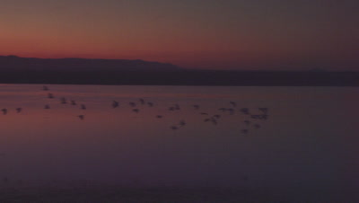 Tracking shot of a flock of birds flying over a waterway at dusk