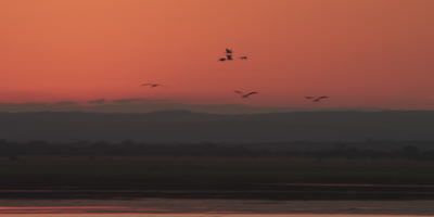 Small flock of birds flying over a river at sunset