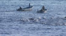 Dolphins Trapped Behind Net, Two Small Boats In Background