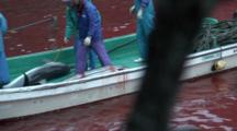 Fishermen In Boat Pull Dead Dolphins Out Of Bloody Water