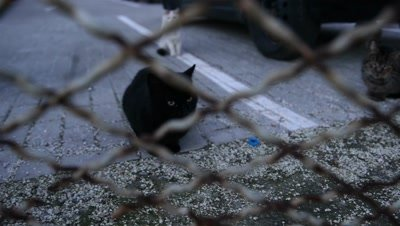 Abandoned cats behind fence