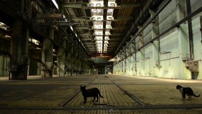 Cat in abandoned interior