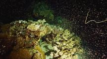 Coral Spawning, Worms, Eggs