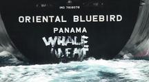 Japanese Whaling Ship Oriental Bluebird