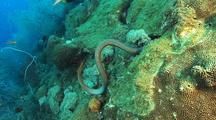 Sea Snake Hunting