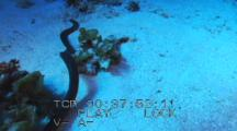 Follow Olive Sea Snake Over Sand