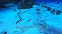 Follow Olive Sea Snake Over Sand