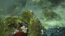 Sponge Spawning Close Up