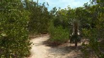 Bahia Honda State Park Nature Trail