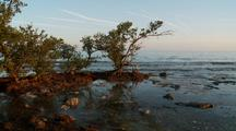 Coastal Mangroves At Sunset