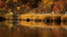 Fall Colors And Reflection On River And In Grasses
