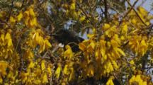 Tui In Kowhai Grooming Exits