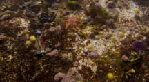 Time Lapse Of Life In A Tide Pool, Sea Stars, Urchins, Hermit Crabs, Snails