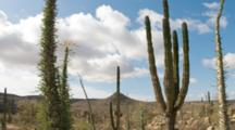Time Lapse Of Clouds Moving Behind Cardon Cactus And Boojum Cirio Tree