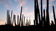 Time Lapse Of Sunset Behind Cardon Cactus