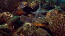 Time Lapse Of Giant Keyhole Limpet And Sea Cucumbers Moving Over Reef