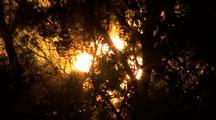 Bright Sun Through Trees - Brahminy Kite