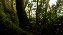 Antarctic Beech Tree Forest