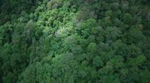 Aerial Over Lamington National Park, Dense Forest
