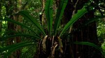 Dense Vegetation In Rainforest, Fern On Tree Trunk