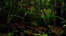 Dense Vegetation In Rainforest