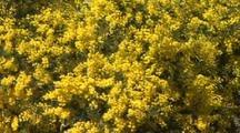 Outback Australia NatureScape Stock Footage