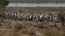 Pelican Rookery, Lake Wyara, Currawinya National Park