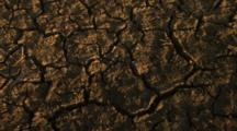 Close-Up Dry, Cracked Earth