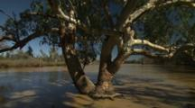 Trees Growing In Outback Watering Hole