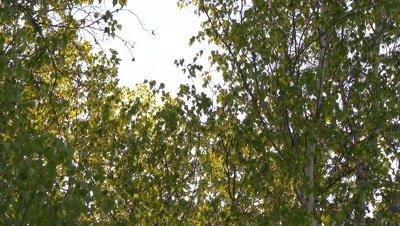 Sunshine filtering through leaves