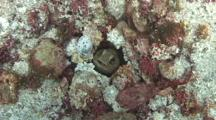 Top View Of The Jawfish's Nest