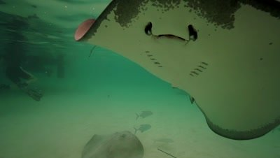 stingray covering the camera