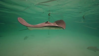stingray checking the camera