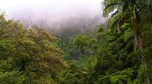Misty Mountains Behind Lush Rainforest