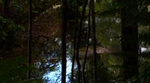 Understory Diversity In Dense, Lush Rainforest With Stream