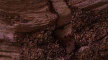 Cu Of Termite Soldiers Defending Breach In Termite Highway