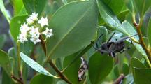 Spider On River Mangrove Plants Near Flowers