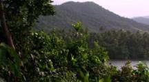 Rainforest Clad Hills Overlooking The Sea